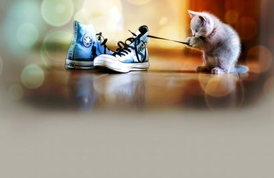 Chaton - Jeux - Baskets - Lacets - Wallpapers HD