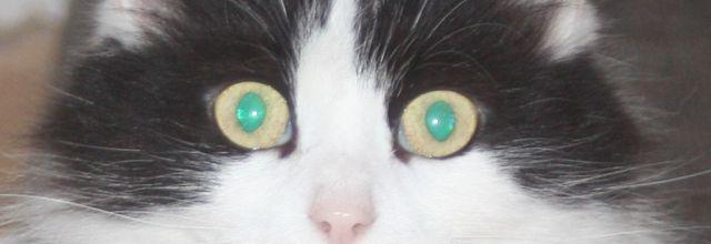 Comment énerver un chat?