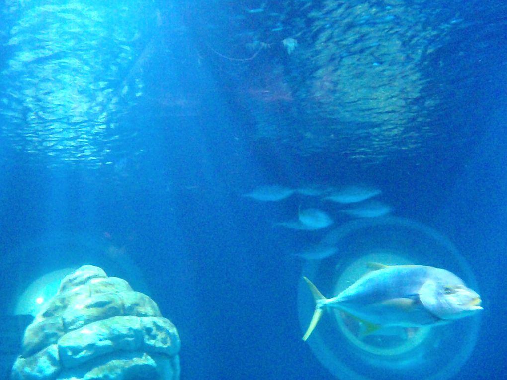PROGRAMME des VACANCES ET PHOTOS DE LA VISITE à SEA LIFE