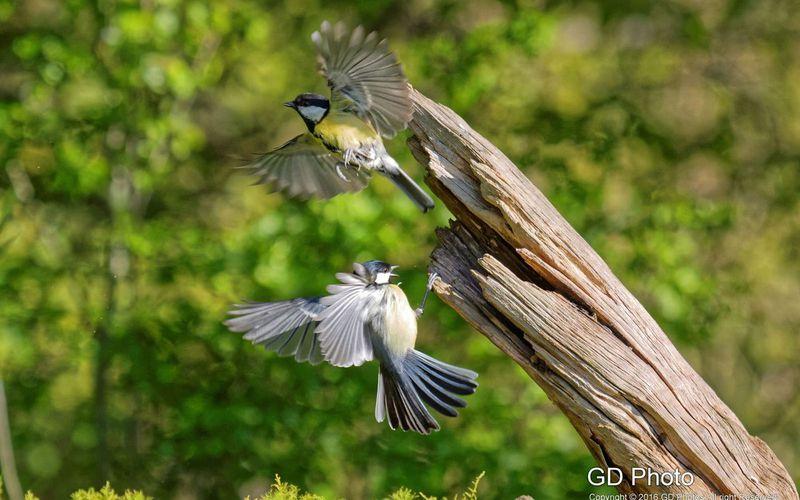 FLY BIRDS