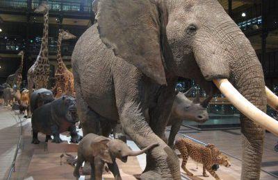 La Chine et les USA devraient interdire totalement le commerce de l'ivoire