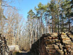 Ma sortie Trail dans la forêt des 3 Pignons à Fontainebleau