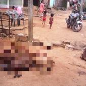 INDE: attaque du CHUPACABRA dans un village du district de Ganja en Orissa.