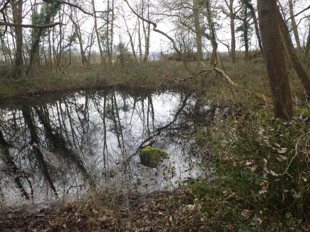 La mare du bois communal d'Hautot-sur-Seine n'en est pas une