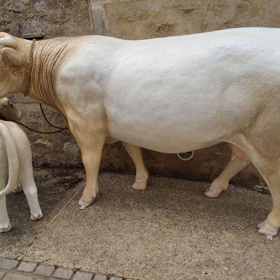 Charmante la Charolaise et Prince son fils, attendaient les collégiens de Moulins-Engilbert devant le Musée, le 18 Juin 2021, pour une visite dans le cadre des journées de l'Agriculture.