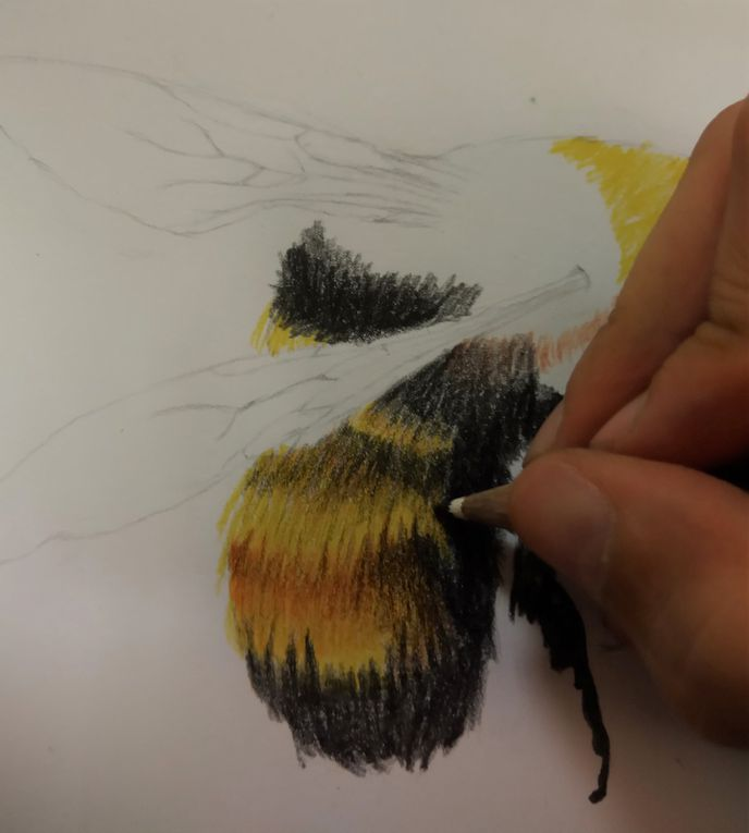 Cours de dessin enfants : travail de texture sur le thème des abeilles. Chloé, Marie (14 ans) et Rose (8 ans)