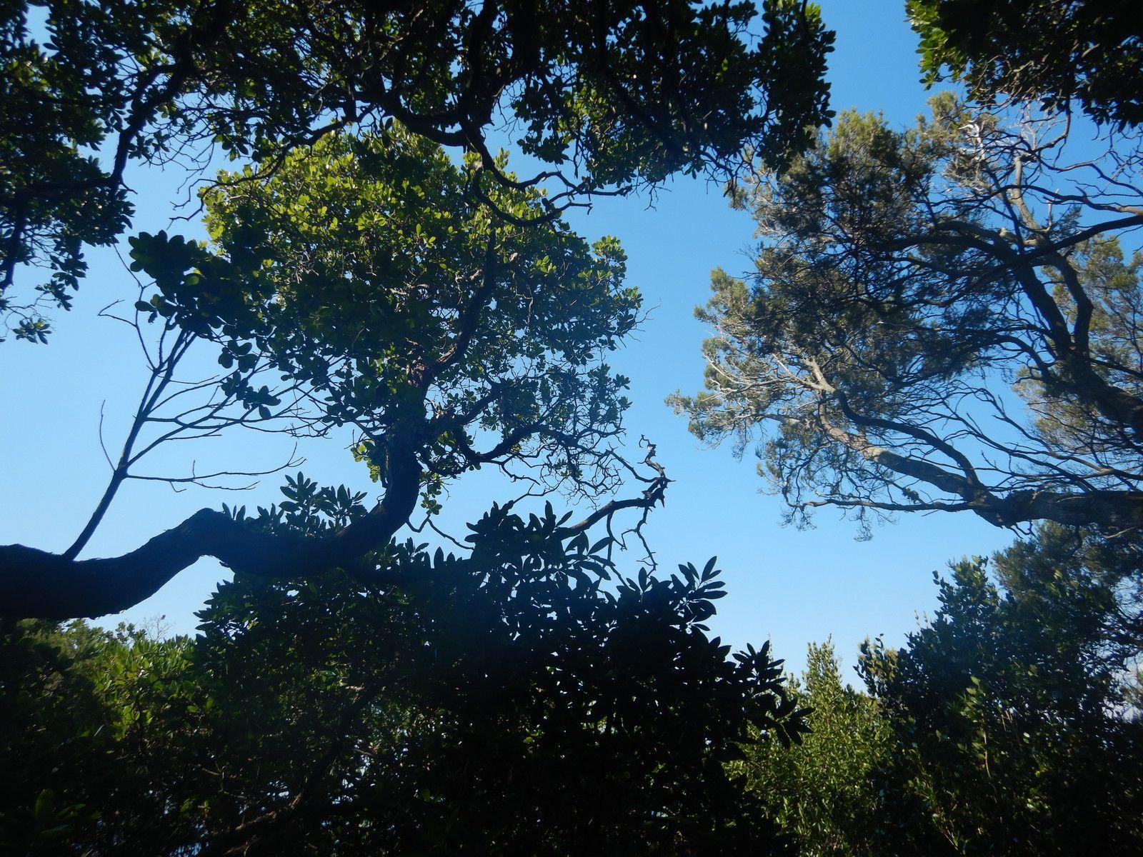 Arbutus unedo et Erica arborea