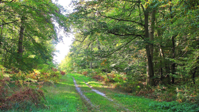 le carrefour de Beauval
