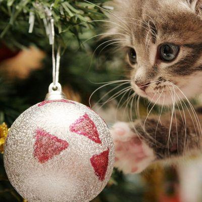 Préparez Noël avec votre chat