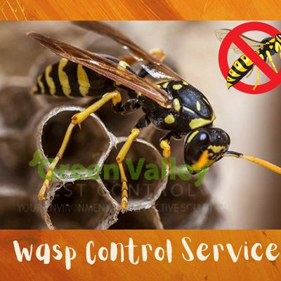 Wasp Control in Vancouver: Why It's The Right Job For Professionals