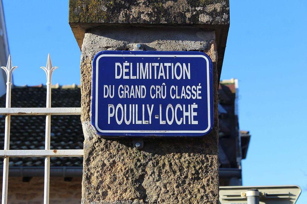 Les blancs du Sud de la Bourgogne: Pouilly Loché