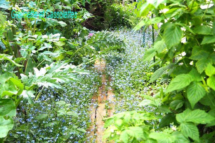 Le Jardin sous la Pluie de Mai