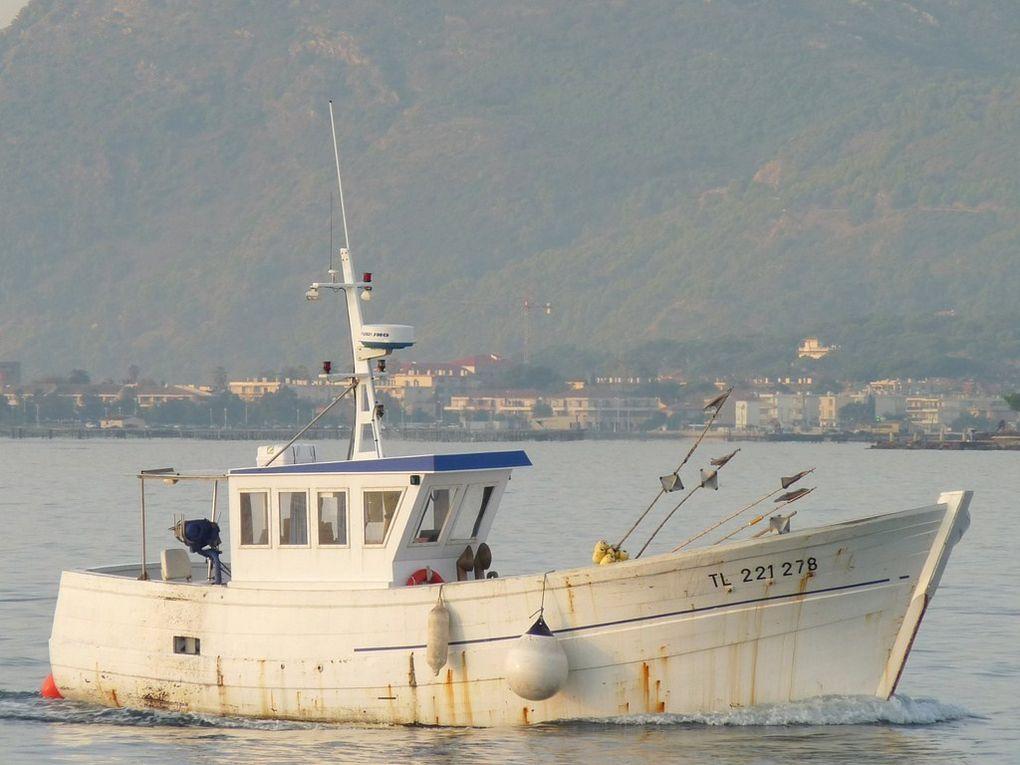 SIROCCO TL 221278