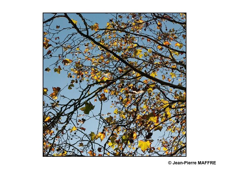 L'arbre est un être privilégié pour symboliser l'automne et ses aspects éphémères.