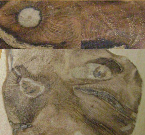 """Les plus beaux détails de l'exposition """"bois en liberte"""""""