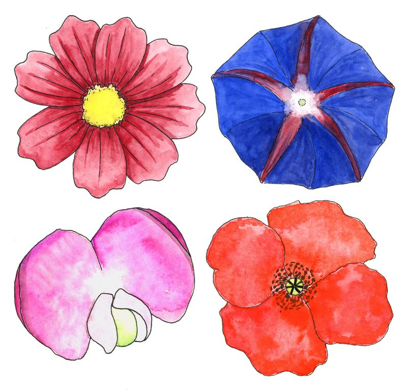 Illustrations de fleurs