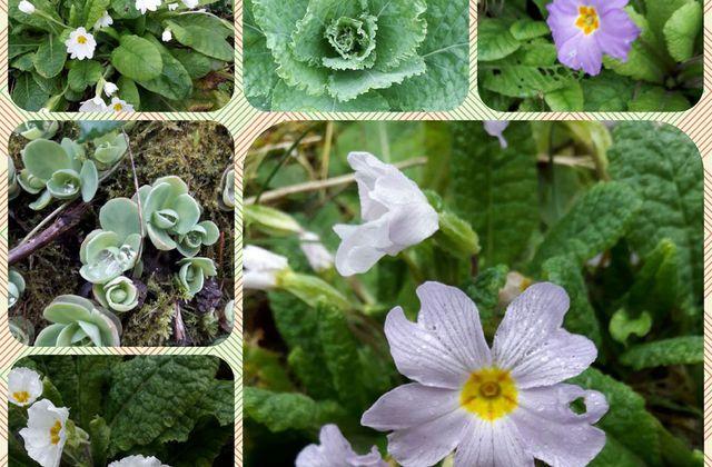 Floraisons d'hiver