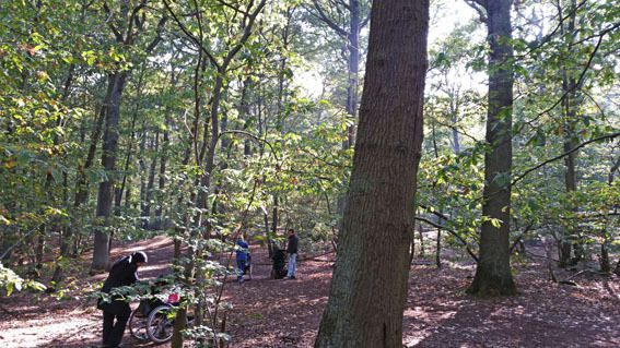 Sortie de la classe de CE1 dans le bois de St-Cucufa