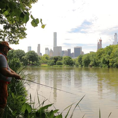 Fishing in central park!