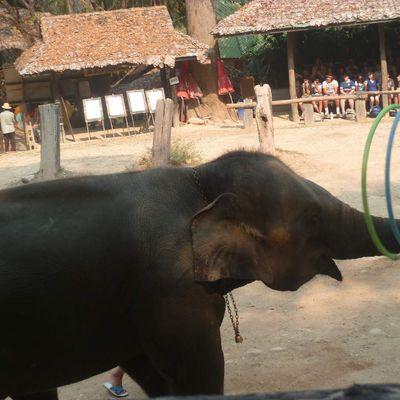 CHIANG MAI ET SES ELEPHANTS
