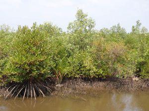 Les marais salais dont le procédé est calqué sur les marais de Guérande