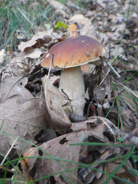 Petit tour aux champignons