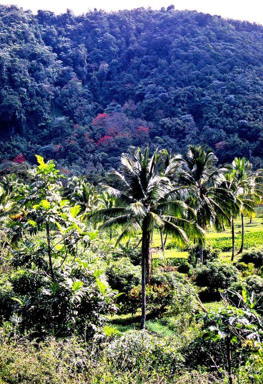 Le Piton est l'emblème de l'île, un ballet d'hélicoptères en fait le tour jusqu'aux cinq étoiles avoisinants. On peut se balader dans un forêt préservée, peuplée de flamboyants.