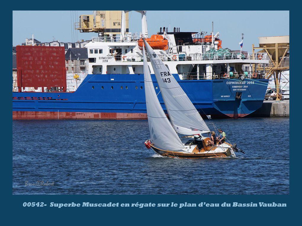"""de la planche à voile aux """"monstres"""" trimarans, en passant par les bolides catamarans"""