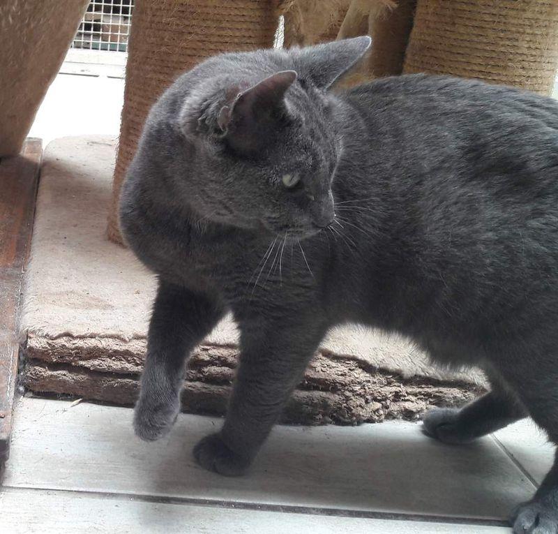 Il est adopté  !!!  :  BLUEBIRD, très gentil mâle castré de 11 mois