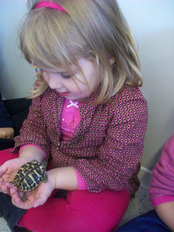 La tortue de la classe maternelle