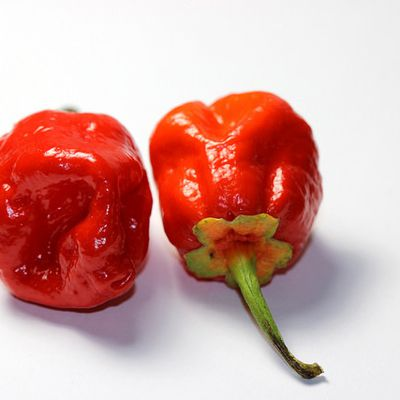 Six 7-Pot Chili Peppers You Need to Grow