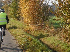 Les feuilles d'automne ne vont pas tarder à s'envoler...Certains arbres sont déjà dénudés.