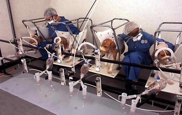 Le tabac est systématiquement testé sur les animaux