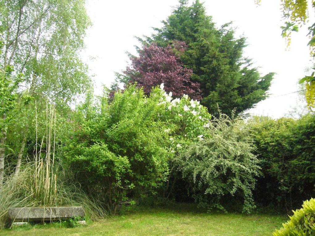 Album - notre-petite-cabane-de-jardin