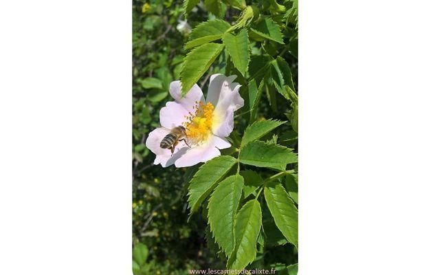 3 beaux livres sur les abeilles