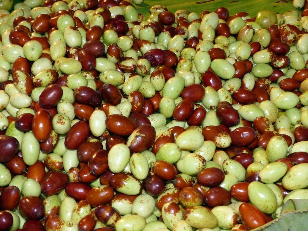 Certains fruits sontde toutepetitetaille, pas plus gros que des cerises ou des amandes pour certains.
