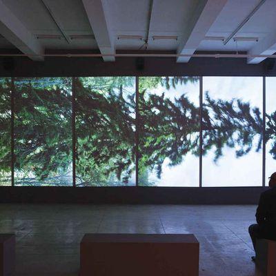 """Vu(e) de l'arbre. Expériences singulières à l'""""Horizontal"""" d'E-L. Ahtila et dans """"Les Yeux ronds"""" d'A. Michel"""