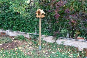 Aménager un endroit dans votre jardin pour nourrir les oiseaux