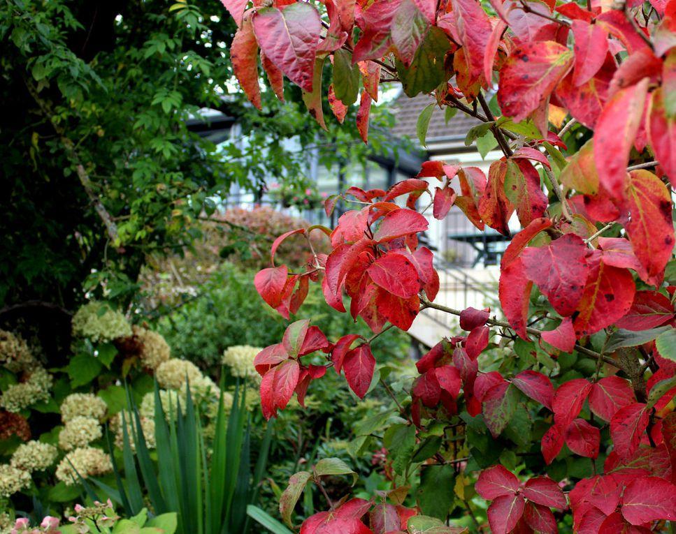 Couleurs d'automne au jardin,