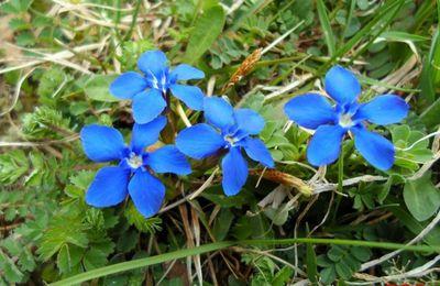 Les fleurs sont les étoiles de la terre