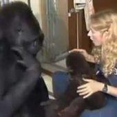 Koko le gorille - part 1 (sur4) fr