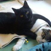 Ce chat soigne des animaux malades et fait craquer les internautes