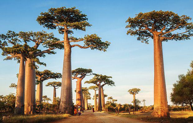 Flora y fauna de Madagascar son únicas en todo el mundo: África por dentro.- El Muni.