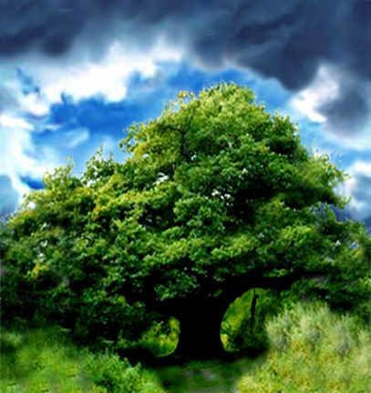 Découvrez les trésors de la Nature à travers une galerie d'images variée : aquarelles d'Alan Lee, photos personnelles, dessins, gravures...