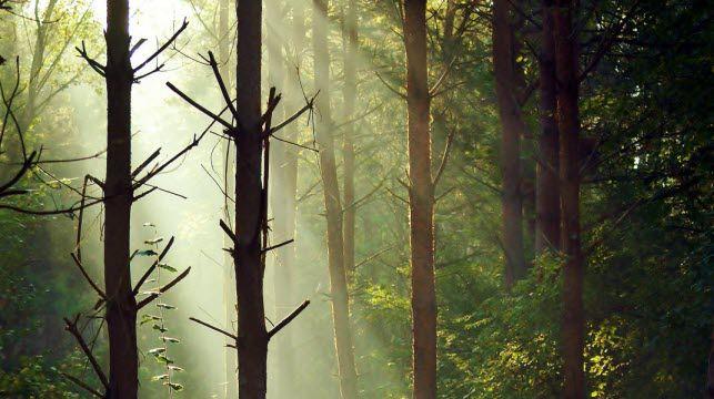 La forêt de Bord, où Geoffroy a passé plus de sept ans à vivre, dormir, manger comme les chevreuils. Photo : Geoffroy Delorme (Cliquez pour agrandir)