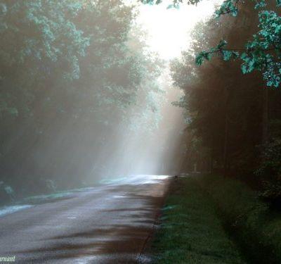 Impressions /  Au petit matin s'abandonner au calme du village / puis s'aventurer sur la petite route de la forêt, / dans l'effervescence de la chute des dernières feuilles / ou de la poussée tardive de quelques rares brins d'herbe. / (iovan.g)