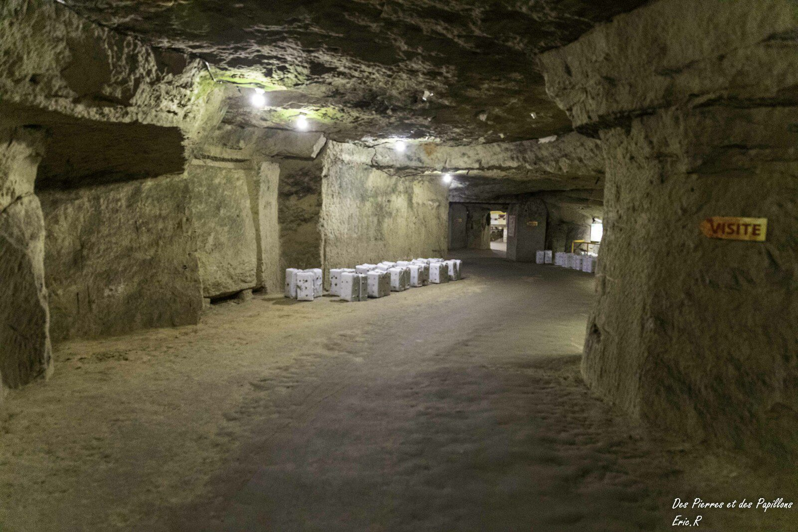 Les salles et galeries du musée du champignon.