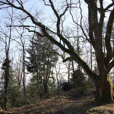 STEINBACH : ERZENBACH ET SCHLETZENBOURG (R 396) - 6,7 km - D+208 m - 2 h 15 mn - 2/6