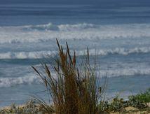 Les brins d'herbe, en haut de la dune