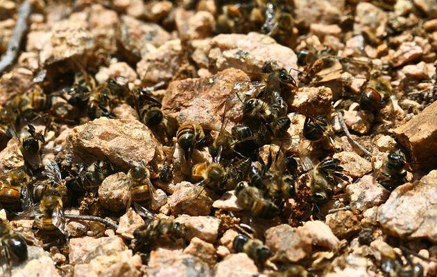 Respiramos veneno, las abejas nos alertan
